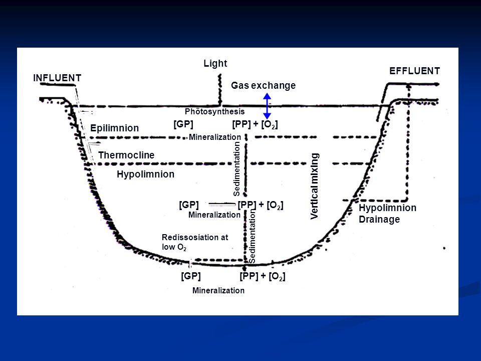 Light EFFLUENT INFLUENT Gas exchange [GP] [PP] + [O2] Epilimnion